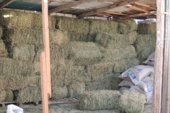 Hay for Stables