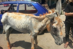 Mr Donk rescued from the street
